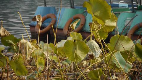 lotus leaf pool in autumn beijing Stock Video Footage