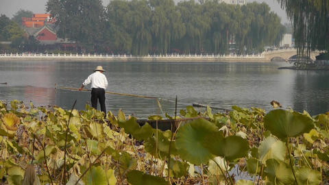 fisherman on boat,Vast lotus leaf pool in autumn beijing... Stock Video Footage