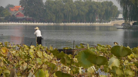fisherman on boat,Vast lotus leaf pool in autumn beijing & lake bridge raili Footage