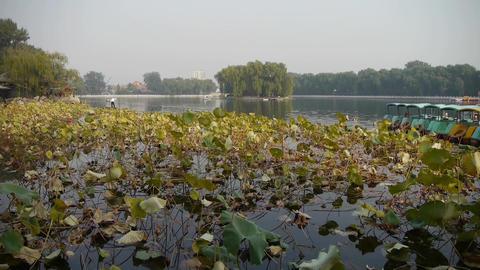 Vast lotus pool lake,Fisherman on boat in beijing Stock Video Footage
