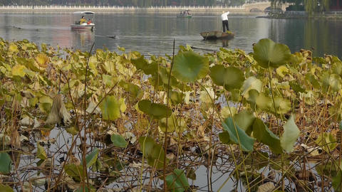 fisherman on boat,Vast lotus leaf pool in autumn beijing... Stock Video Footage