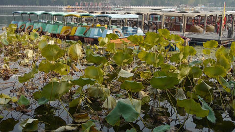 Vast lotus leaf pool pier in autumn beijing.many toy boat Stock Video Footage