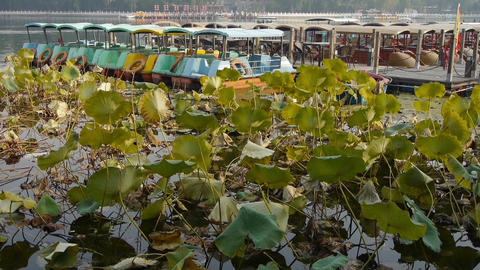 Vast lotus leaf pool pier in autumn beijing.many toy boat Footage