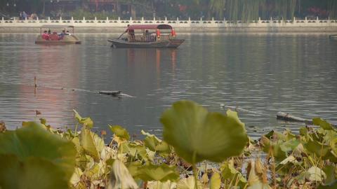 Vast lotus leaf pool in autumn beijing & lake railings Stock Video Footage