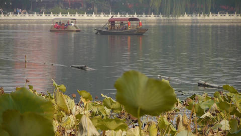 Vast lotus leaf pool in autumn beijing & lake railings Stock Video Footage