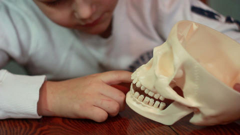 Boy plays with skull 2 Stock Video Footage