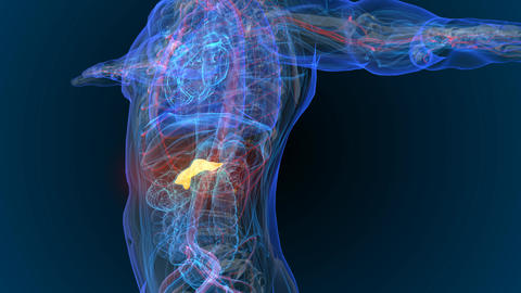3d rendered illustration of pancreas - cancer - Illustration Animation