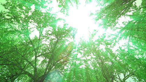 forest, upward, rotation, loop, green light Animation