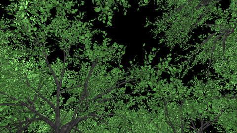 forest, upward, rotation, loop, black background CG動画