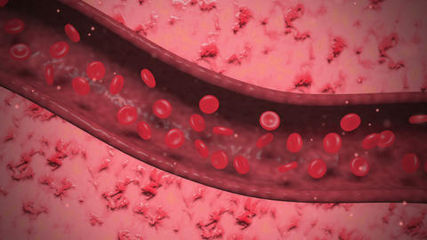 Cutaway view of blood cells flowing through artery Animation