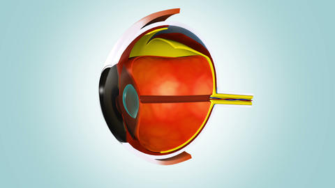 Anatomy of human eye Animation