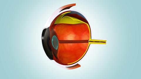 Anatomy of human eye Animation