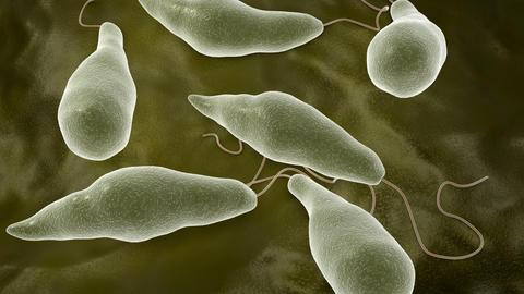 Euglena microbe Animation