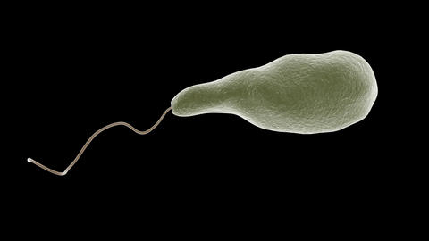 Euglena microbe Animation
