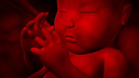 Close-up visualization of fetus movement in womb Animation