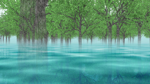 Going through the forest _ loop _ blue pond , reflection Animation