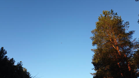The plane flew over the forest. Flight of the plane on a background of pine Live Action
