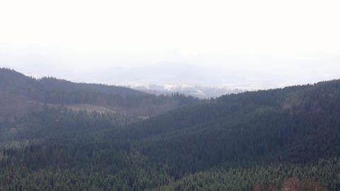 Beautiful spring landscape with mountains, pine woods forest mountain valley Live Action