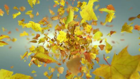 Exploding autumn leafs background Animation