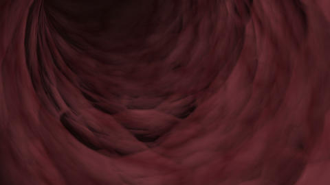 Interior visualization of blood vessels Animation