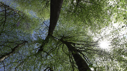 Sun star shine through forest canopy, low angle view in motion Footage