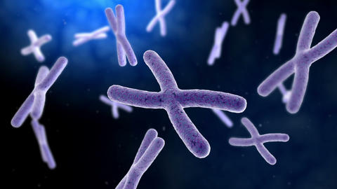 Microscopic visualization of chromosome with DNA Animation