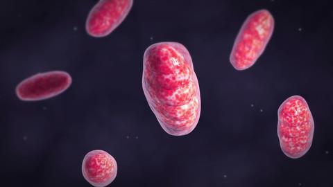 Microscopic visualization of mitochondria Animation