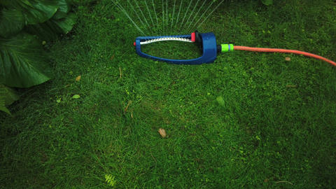 Lawn sprinkler system on garden in grass. Sprinkle sprays water on the green Live Action