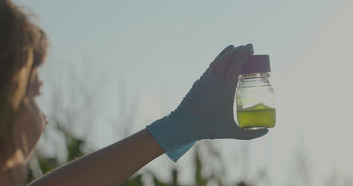 Agriculture science researcher on Corn Fields. Woman scientist with test tube Footage