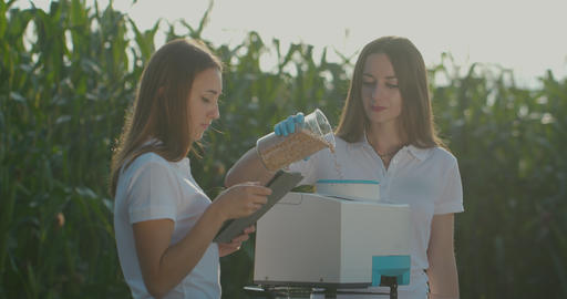 Biologists or agronomists analyzes the wheat seeds on professional equipment Footage