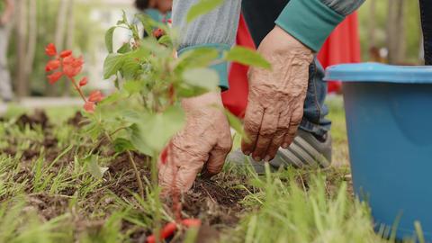 People Hands Plant Flowers Garden Greenery Outdoor ライブ動画