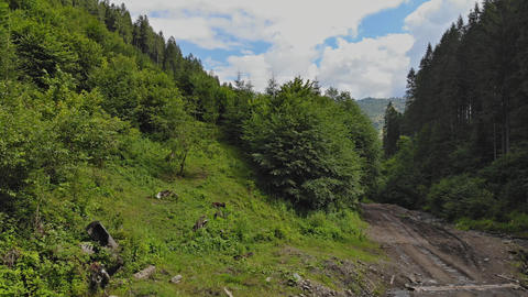 Mountain road in forest. Amazing place to visit in Carpathian on mountain road Live Action