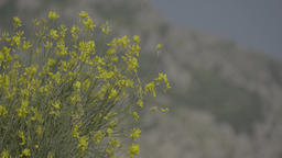 The mountainous landscape of Montenegro. Flowers on a background of mountains Footage