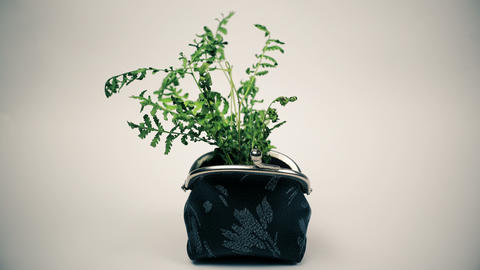 Green plant growing from purse, growing money concept Live Action