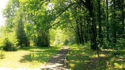 Path through oak grove HD Footage