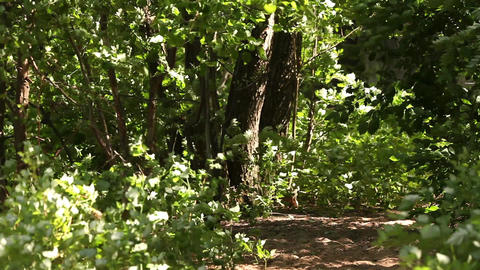 footpath In the thickets green forest Footage