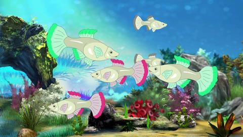 Aquarium Fish UHD Animation