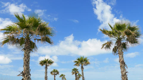 Branches of coconut palms under blue sky, timelapse Footage