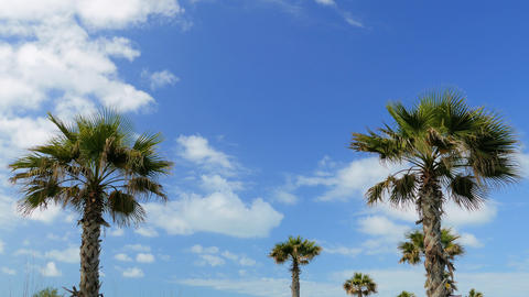 Palm trees at tropical coast and clouds Footage