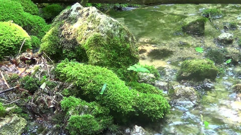A large rock in the water with grass on it GIF