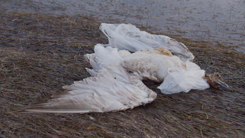 A dead bird, rubbish and bottles over the sea shows the sea pollution Live Action