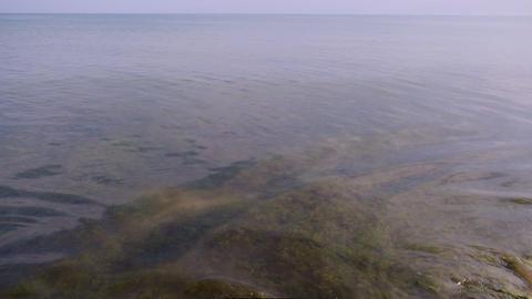 Black Sea coast after a storm, green algae swim in the water Acción en vivo