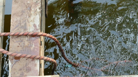 throw the ends of the rope into the water Live Action