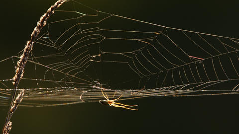 Spider web at back light Live Action
