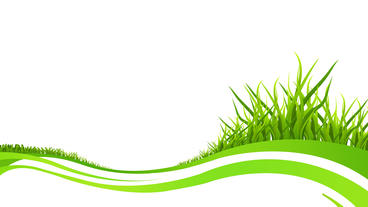 Grass growing animation with some green stripes on white background After Effects Projekt