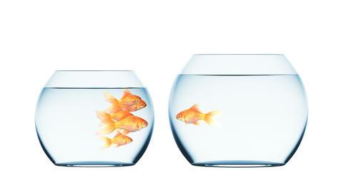 Goldfish Jumping into Another Aquarium Animation