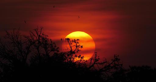 Sunset on Savannah, Masai Mara Park in Kenya, Time Lapse 4K Live Action