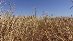 eolic windmill turbine wind generator renewable energy farm in wheat field 4k Footage