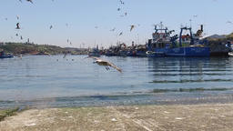 sines fishing harbor with fishing boats and seagulls slow motion 120fps Footage