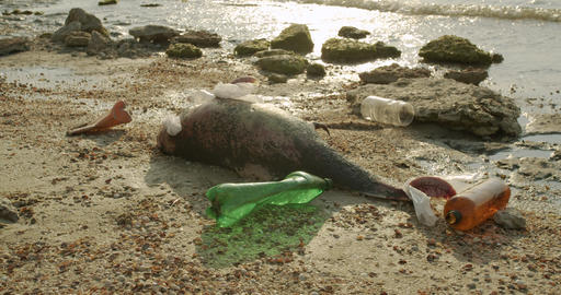 Dead dolphin. Ecological catastrophes become visible throughout the earth Live Action